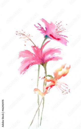 Hand Drawn Of Pink Hibiscus Flowers On White Watercolor Painting